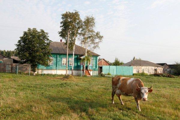 В Воронежской области 32 села претендуют на титул «самого красивого»