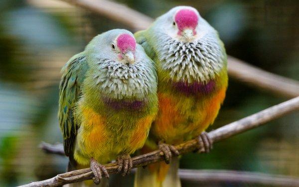 Ученые выяснили, что у островных птиц мозг стал больше