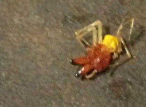 Опасные ядовитые пауки наступают на Ростовскую область
