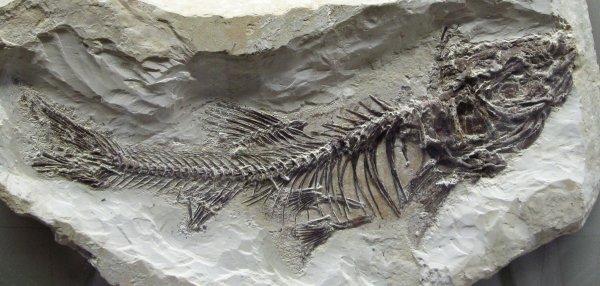 Учёные обнаружили самую древнюю кость в мире