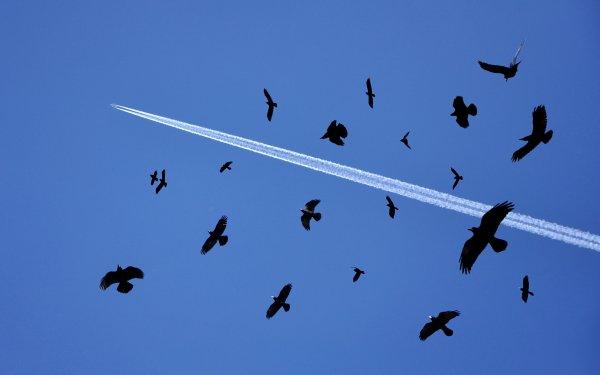 Ученые и квадрокоптеры будут отпугивать стаи птиц от самолетов