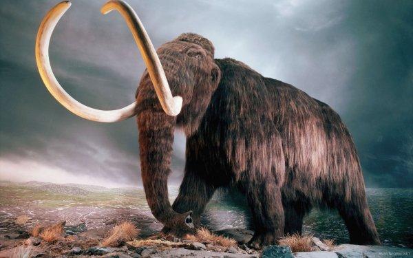 Останки необычного мамонта обнаружили в Якутии