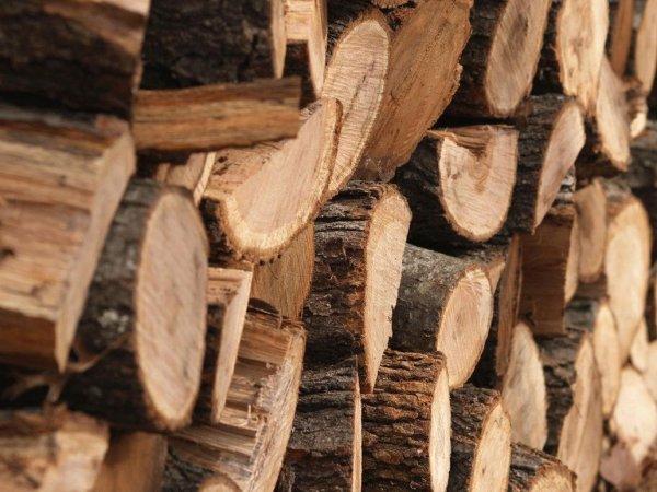 Ученые создали из полимеров огнестойкую древесину