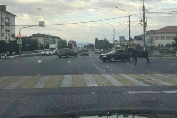 Одна лошадиная сила гуляла по дорогам города в КБР