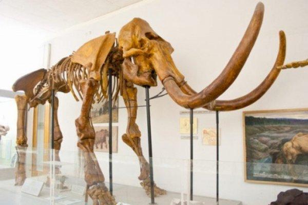 В Якутии ученые обнаружили скелет мамонта с мягкими тканями и шерстью
