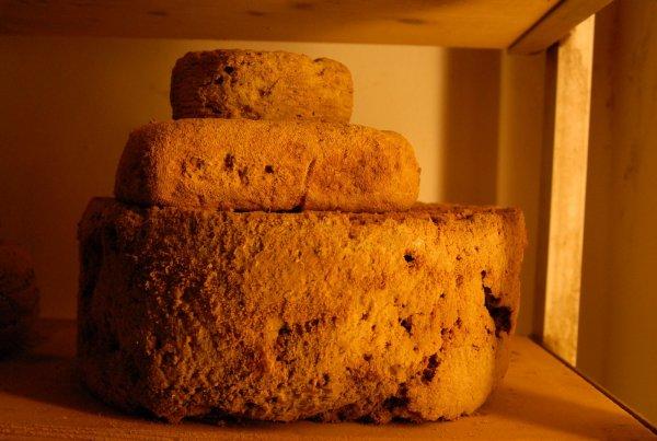 В египетской гробнице нашли старейший сыр с множеством древних бактерий