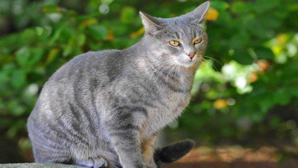 Пропажа на М4 «Дон»: За находку пропавшего серого кота обещают 15 тыс рублей