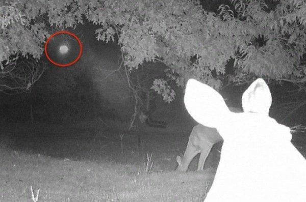 Уфолог опубликовал снимки, где НЛО шпионят за оленями в США