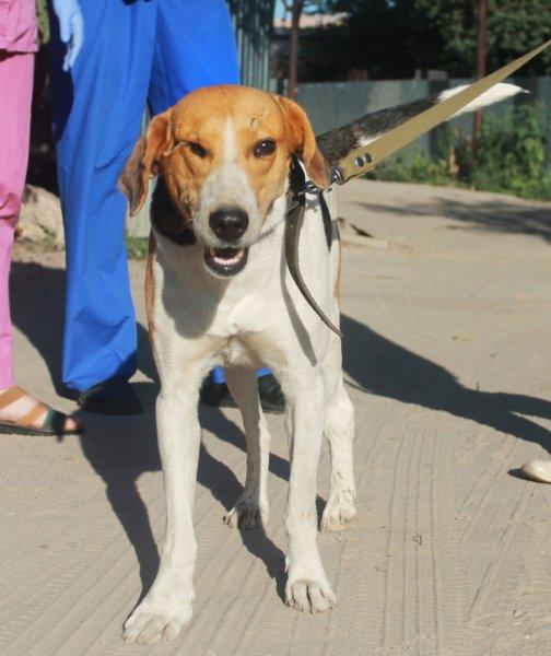 «Отличный парень и добряк»: Пес, переживший аварию на М-4 «Дон», ищет друзей