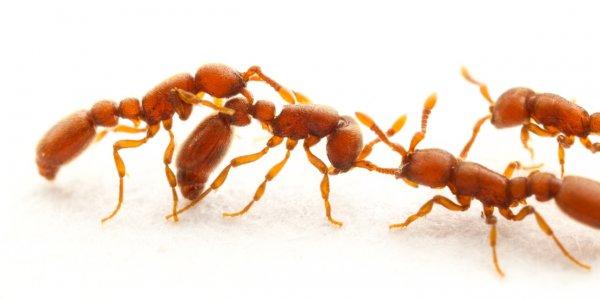 Обязанности в муравьиных колониях распределяются сами собой