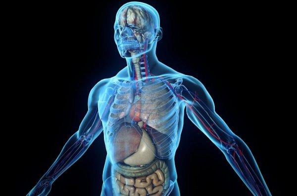 Ученые нашли в теле человека новый, ранее не известный орган