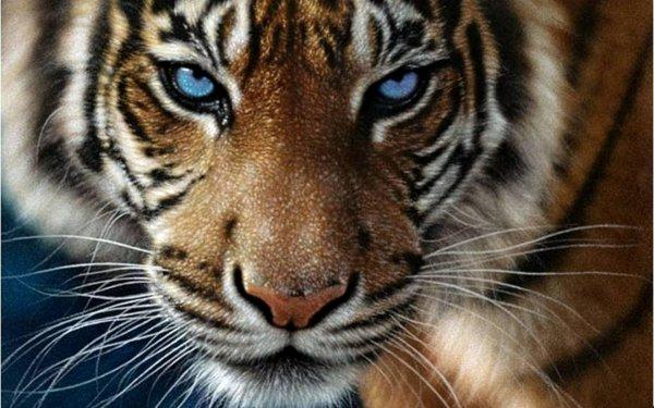 Ученые: Метод поиска серийных убийц способен защитить тигров от уничтожения людьми