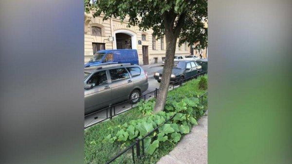 Бахча-нелегалка: В центре Петербурга начали расти дикие тыквы