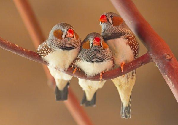 Ученые: Птицы классифицируют цвета так же, как люди