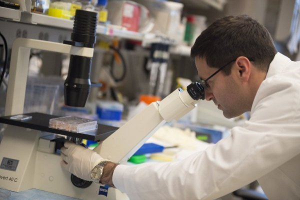 Ученые нашли эффективное и не опасное средство от рака