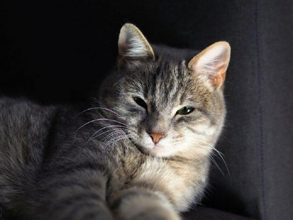 «Защитит от сглаза и порчи»: Житель Кемерово продает кота-экстрасенса за пять миллионов