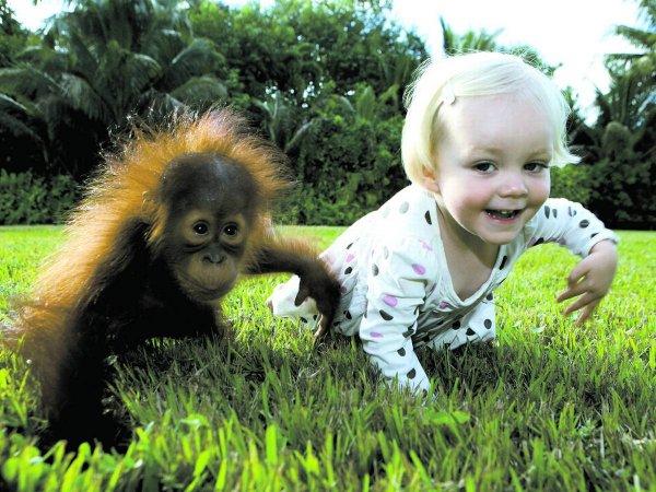 Ученые: Дети и шимпанзе владеют одинаковым языком жестов