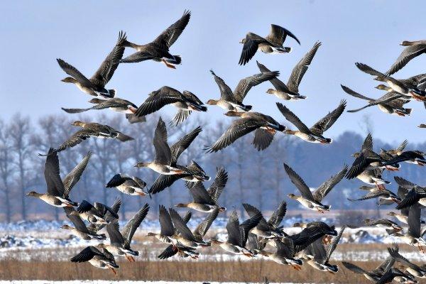 Ученые: Перемена климата в США изменяет привычки птиц