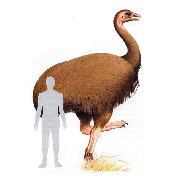 Учёные определили самую крупную птицу в истории