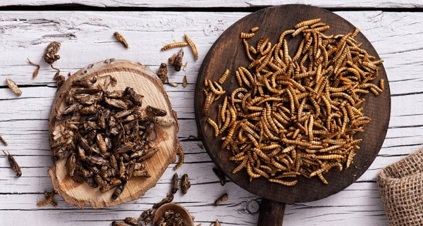 Сверчки на завтрак: Учёные советуют есть насекомых для укрепления здоровья