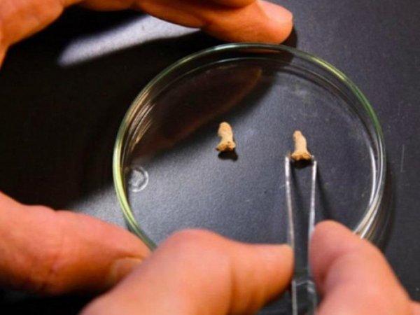 Учёный: Вывод о том, что древняя птица съела ребёнка-неандертальца, был преждевременным