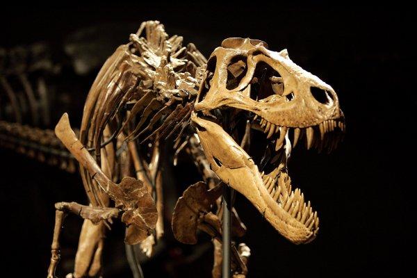 Ученые выяснили причину сохранности костей динозавров