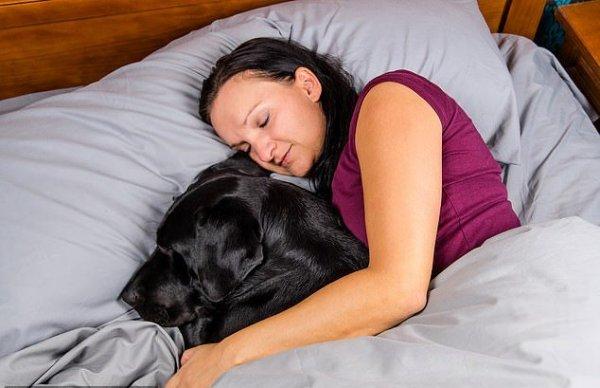 Ученые рассказали, почему полезно спать с собаками, а с кошками нет