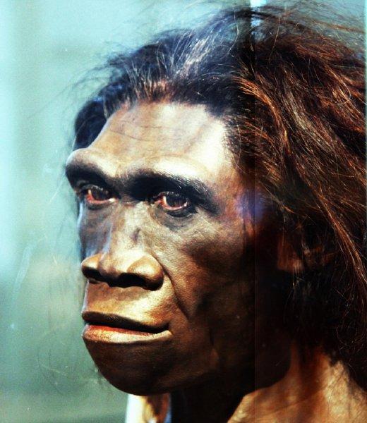 Названы пять малоизвестных фактов об эволюции человечества