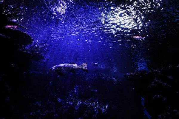 Ученые установили, что земля поглощает свои океаны