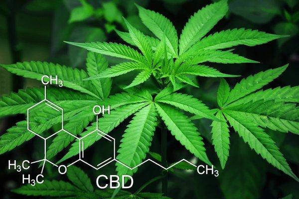 Разработано новое лекарство для желающих бросить курить марихуану