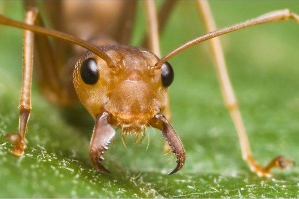 Ученые: Обладателями самых быстрых движений на планете стали муравьи