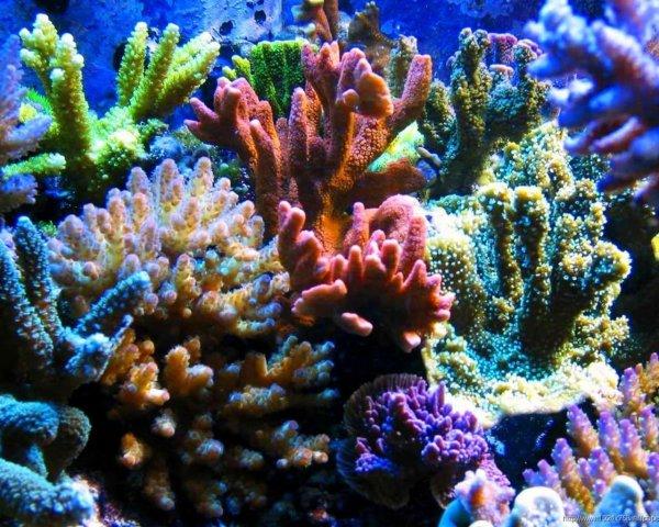 Австралийские ученые обнаружили 195 новых видов глубинных кораллов