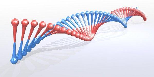 Ученые отрицают существование «гена геев»