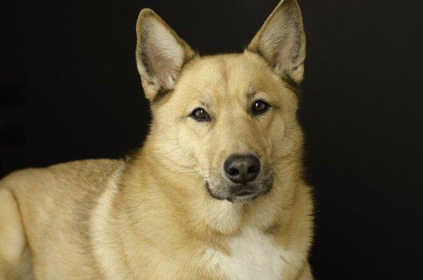 Ученые: собаки копируют характер своих хозяев
