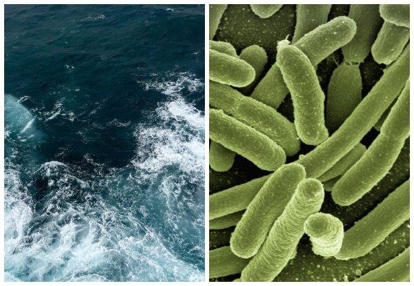 Учёные обвинили бактерии в похищении нефти на дне Марианской впадины