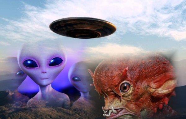 Убитые звери и яйцевидное НЛО над Припятью - В Чернобыле активизировались мутанты с Нибуру?