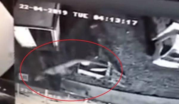 Рептилии с Нибиру уже гуляют по Тбилиси: Космонавты МКС засняли высадку рептилоида над Европой