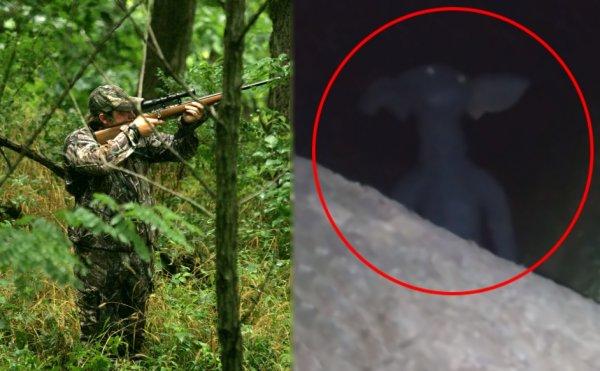 Гоблин-пришелец с Нибиру скрывается в Сибири - Существо с синей кожей и «горящими» глазами напугало охотника
