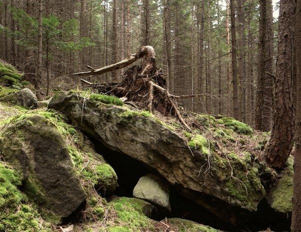 Отродье Сатаны: Забытые Богом деревни Сибири терроризирует неизвестное существо – ведун