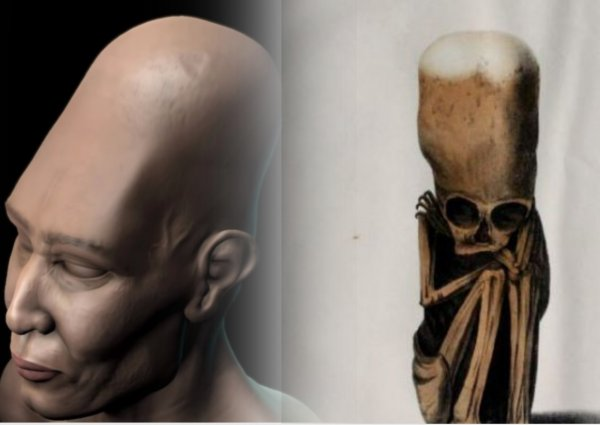 Детёныш пришельца найден в Перу? Учёные воссоздали облик инопланетян по древнему черепу