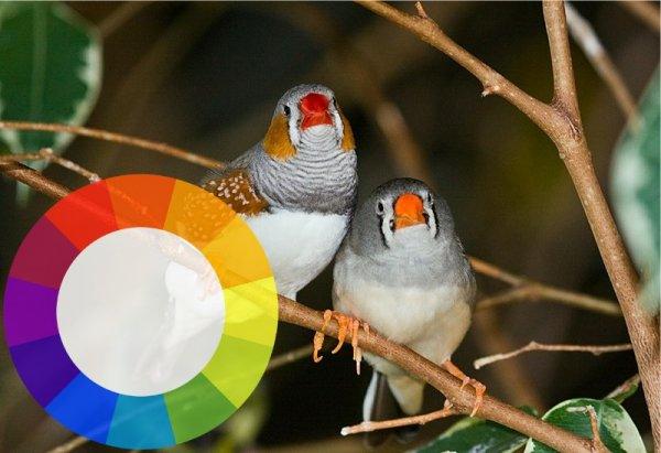 Птицы способны распознавать цвета и пользоваться этим в практических целях