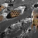 Словно дикие осы: Уфологи обнаружили громадные «ульи» пришельцев на Луне