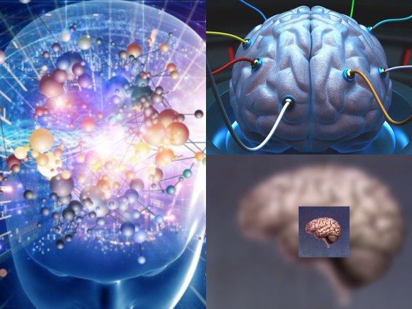 Учёные искусственно вырастили мини-версию человеческого мозга