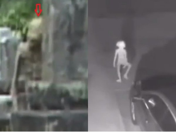 Добби нужен гроб - Эльф-пришелец с Нибиру напал на сторожа кладбища